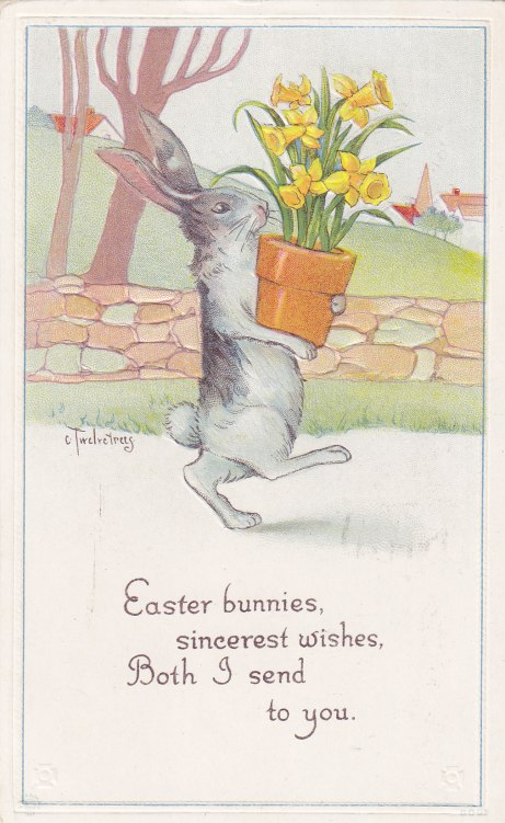 Twelvetrees Bunny