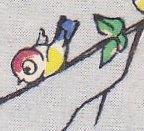 Wide-Eyed Bird