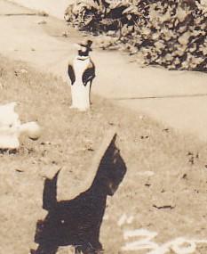 rppc dog_0595